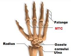 fără lichid în articulații articulația degetului doare de la mouse
