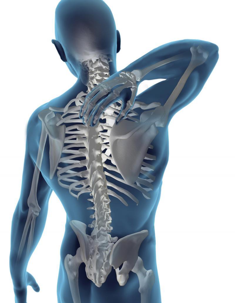 coloana vertebrala)