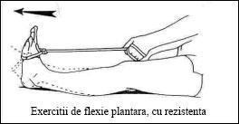 08.flexie_plantara_rezist