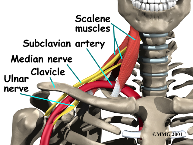 shoulder_thoracic_outlet_syndrome_anat02