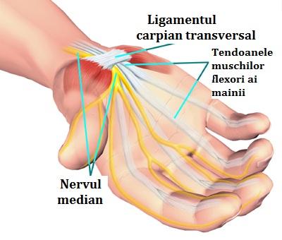 articulația sinovială a degetului inelar doare)