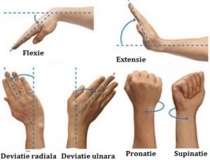 care unguent este cel mai bun pentru osteochondroza inflamația articulațiilor degetului de la picioare