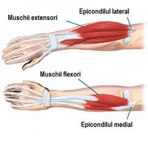 elbow_anatomy07c