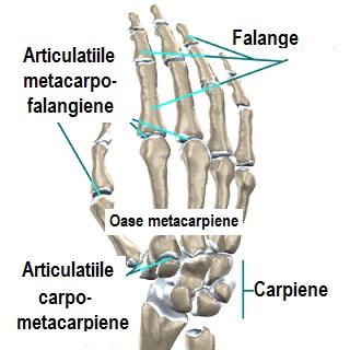 tratați articulația unei mâini care cade
