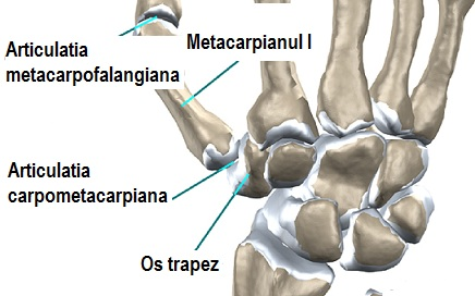 denivelări apoase rănesc articulațiile
