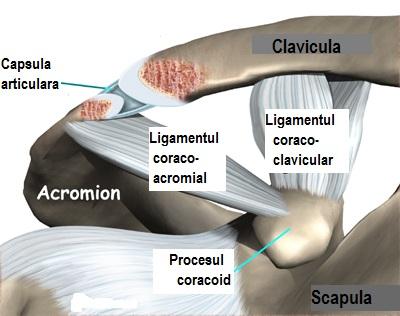 articulația doare la apăsare