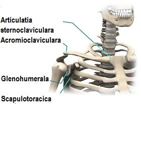 shoulder_dislocation_anatomy03