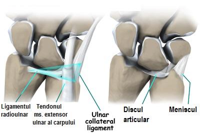 ligamentul triunghiular