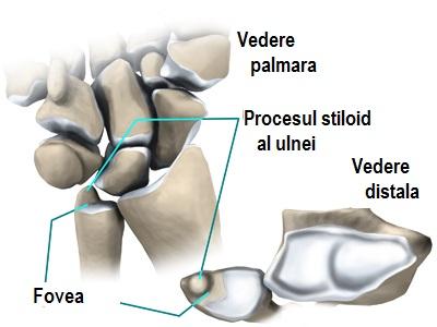 ligamentul triunghiular)