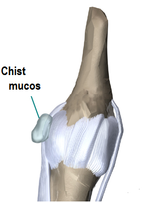 hand_anatomy_intro01