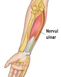 ulnar-nerve-1