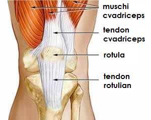 refacerea tendonului rotulian)